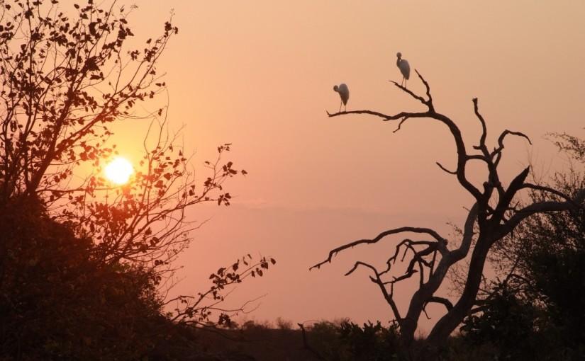 A first time safari by photographer Arron Bryan,UK.