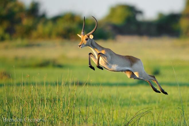 robert mark safaris
