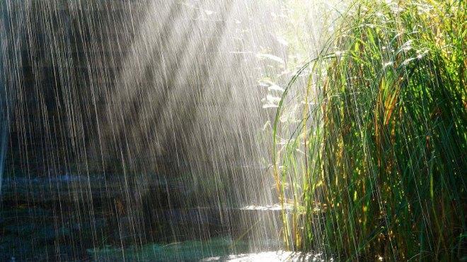 robert mark safaris, african rain
