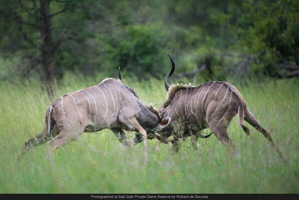 robert mark safaris, african safari