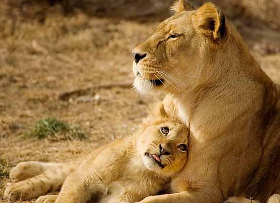robert mark safaris, africa safari specialist, kenya safari, zambia safari, botswana safari, south africa safari, luxury safari