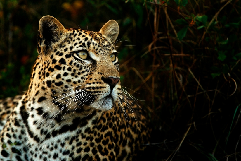 A Leopard Never Changes itsSpots