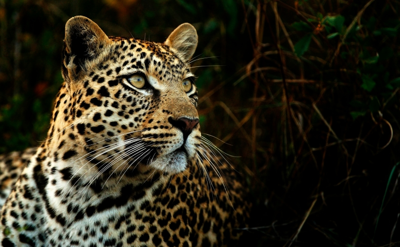 A Leopard Never Changes its Spots
