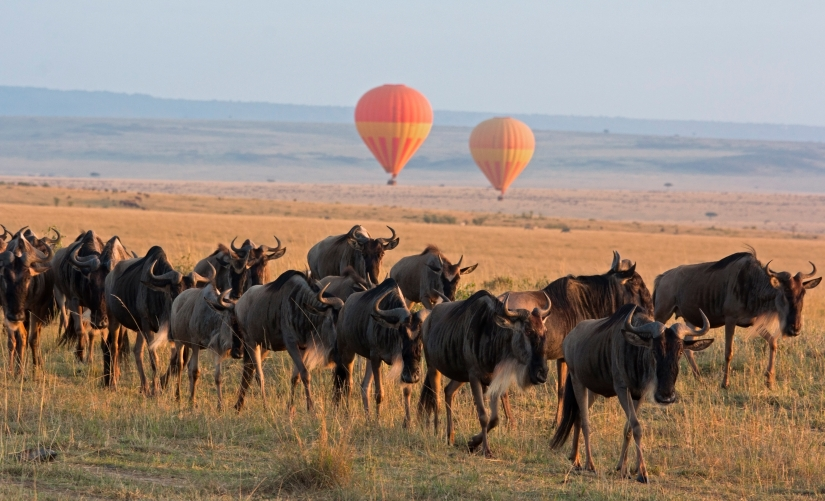 The Best Safaris in Tanzania, by Our Safari Experts