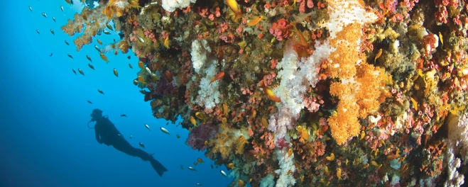 Robert Mark Safaris_Coral Reefs of Mauritius_Snorkelling Trips