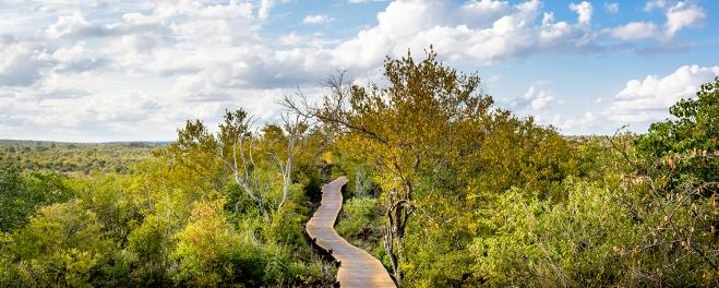 Robert Mark Safaris_Cape Town_Singita Pathway