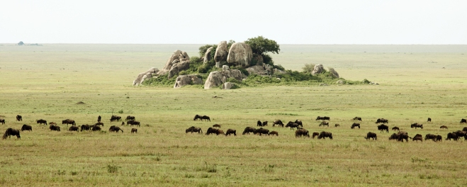 Wildebeest-South-Serengeti.jpg