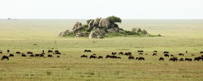 Wildebeest-South-Serengeti.jpg