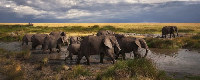 Robert Marks Safari_Elephants at the River_SerengetiRobert Mark Safaris_Elephants at the River_Serengeti