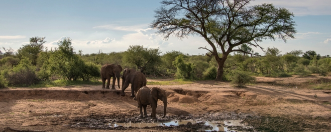 Robert_Mark_Safaris_Madikwe Elephants at Watering Hole