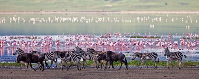 Robert Mark Safaris_Wildlife at The Ngorongoro Crater