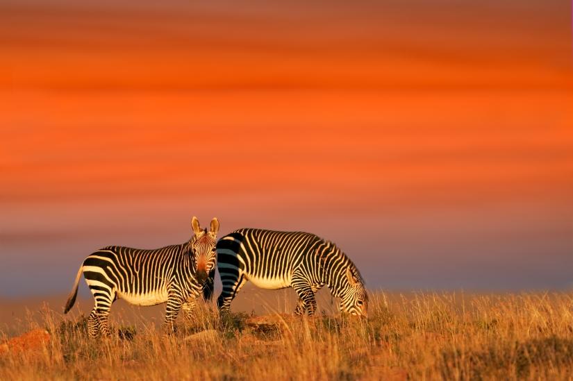 Madikwe Game Reserve and Operation Phoenix: People-based WildlifeConservation