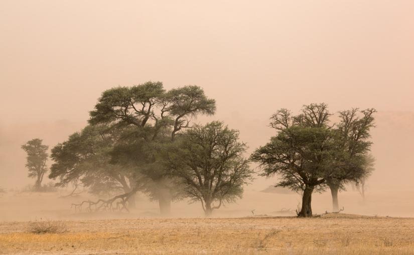 Robert Marks Safari_Dry Tree in The Kalahari