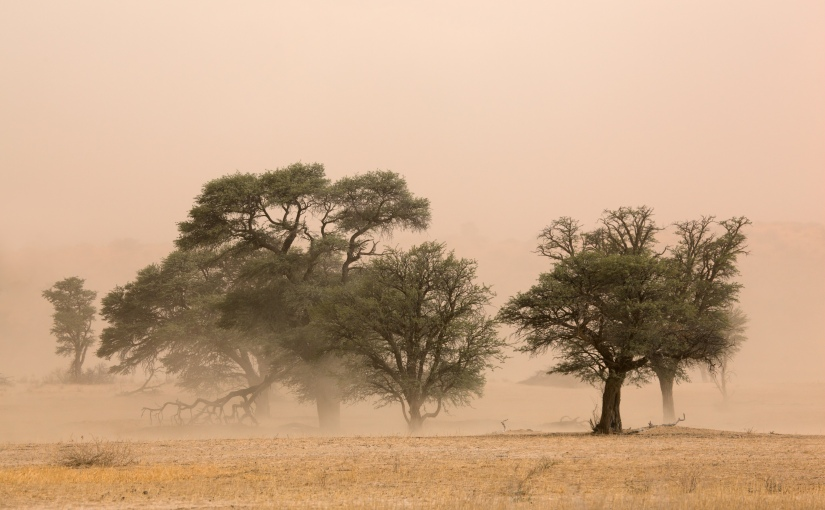 Best Game Reserves in Botswana: Central Kalahari GameReserve