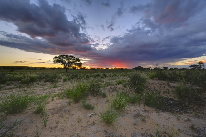 Robert Marks Safari_Kalahari Sunset