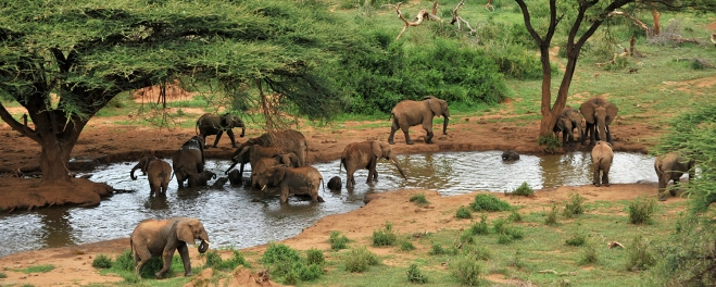 Robert Mark Safaris_Laikipia Elephants at Watering Hole