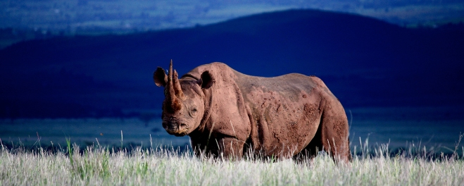 Robert Mark Safaris_Laikipia Rhino