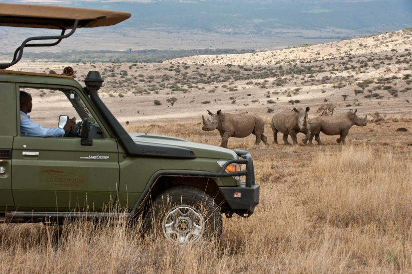 Robert Mark Safaris_Game Drive at Lewa House