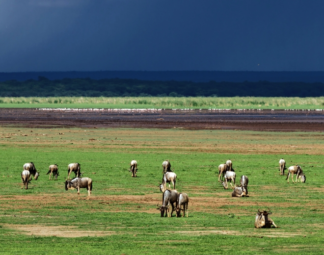 Robert Marks Safari_The Hadza Tribe of Tanzania: The Last True Nomads of Africa