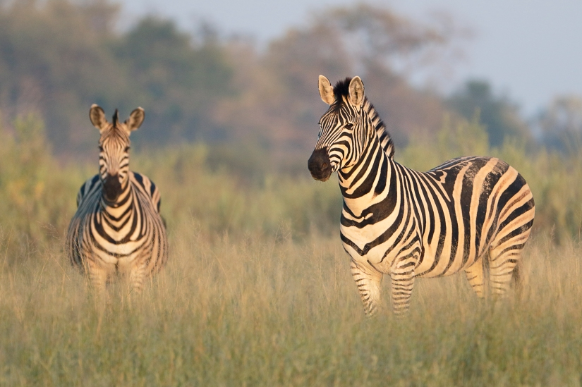 The Best Game Reserves in Africa: Spotlight onBotswana