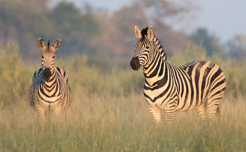 The Best Game Reserves in Africa: Spotlight on Botswana